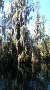 okefenokee swamp vertical